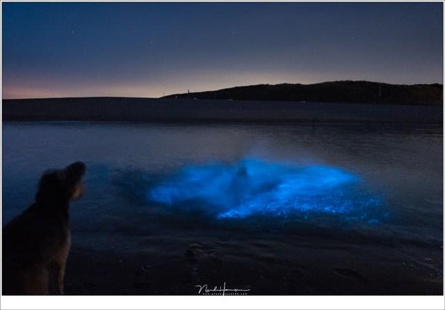 Bruc kijkt toe hoe Hetwie het water in springt en een fontein van blauw licht laat ontstaan.