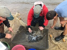 Photo of staff conducting 2018 Striped Bass young of year survey