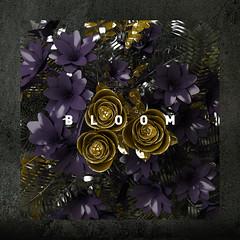 MALA – Bloom