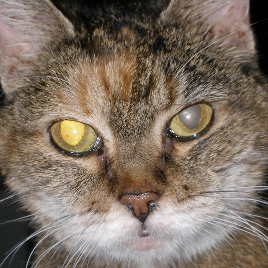 21 Year Old Cat Eyes