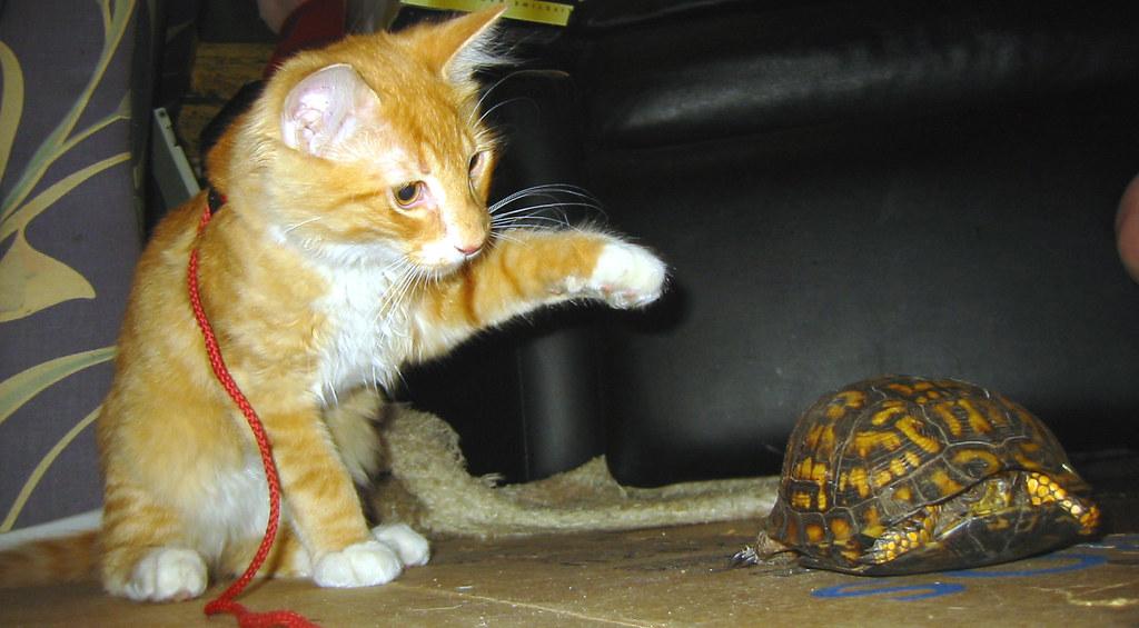 20080622 Oranjello And The Turtle 159 5952 Oranjello
