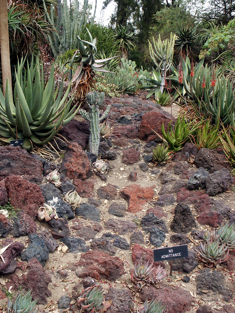 Lava Rock Landscaping