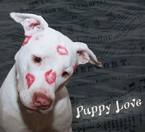 Kissy Face White Puppy Dog Love Kahuna Luna Covered In Li