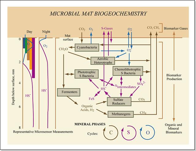 Microbial Mat Biogeochemistry   Microbial mat biogeochemistr…   Flickr