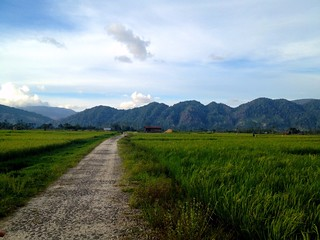 pretty dirt road through rice fields in wuasa sulawesi