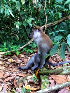 monkey sitting on fallen branch in bukit lawang