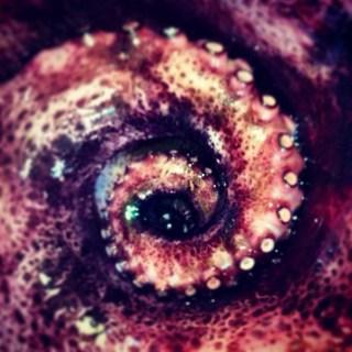 Tentáculo del pulpo