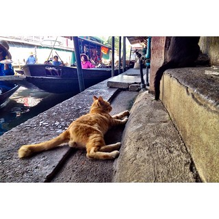 cat resting in damnoen saduak floating market