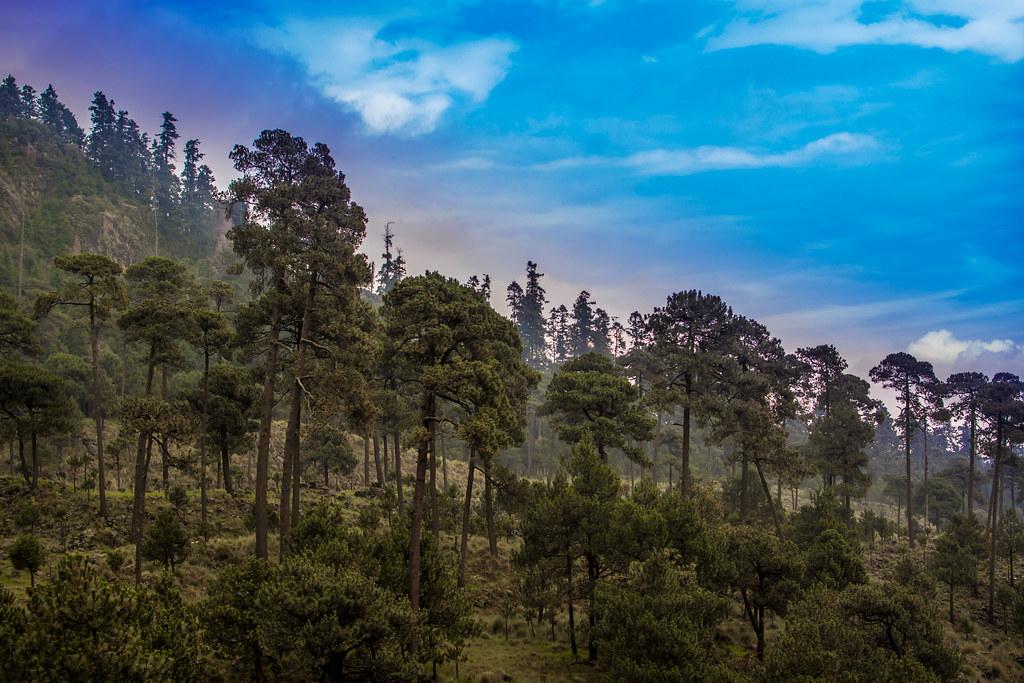 Parque Nacional Cumbres Del Ajusco Ajusco Is A 3 930 M
