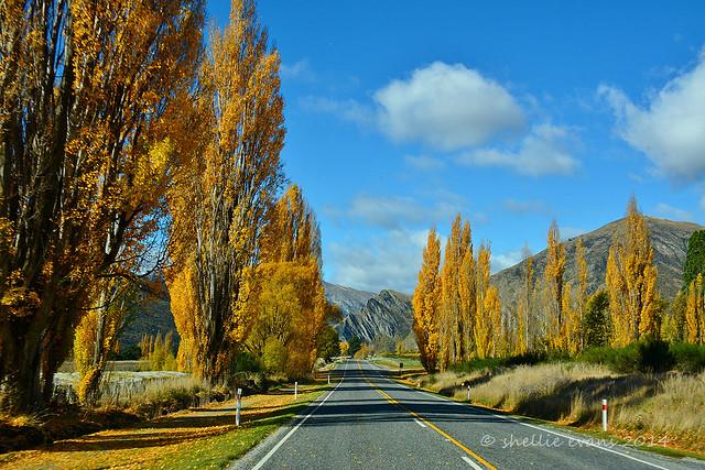 Gibbston Valley Gold, Queenstown, NZ