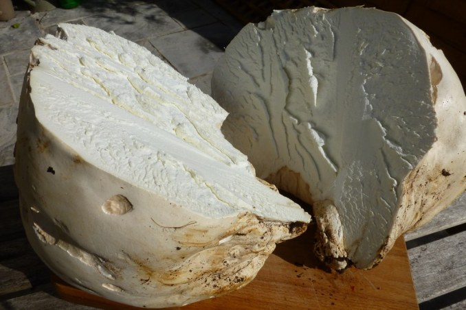 Giant Puffball Mushrooms | Demuths Cookery School | Flickr
