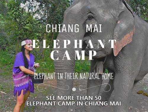 Elephant Camp Sidebar