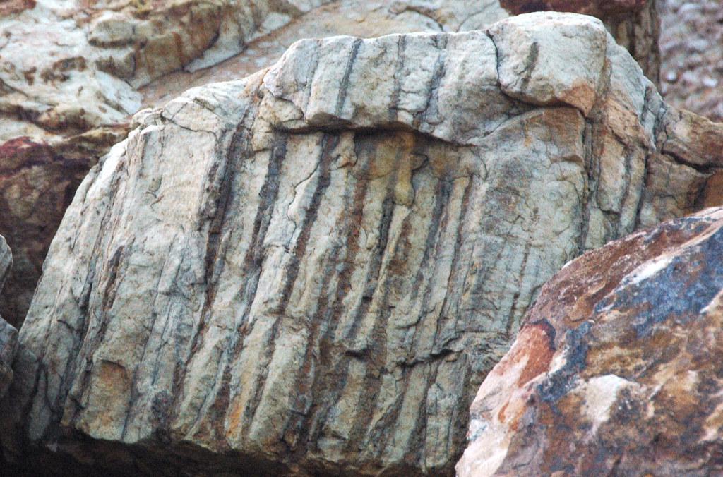 Skolithos Linearis Burrows In Quartzite Clinch Formation