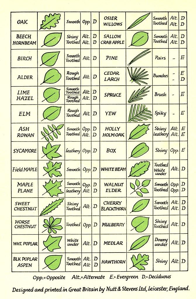 Oklahoma Plants Identification Native