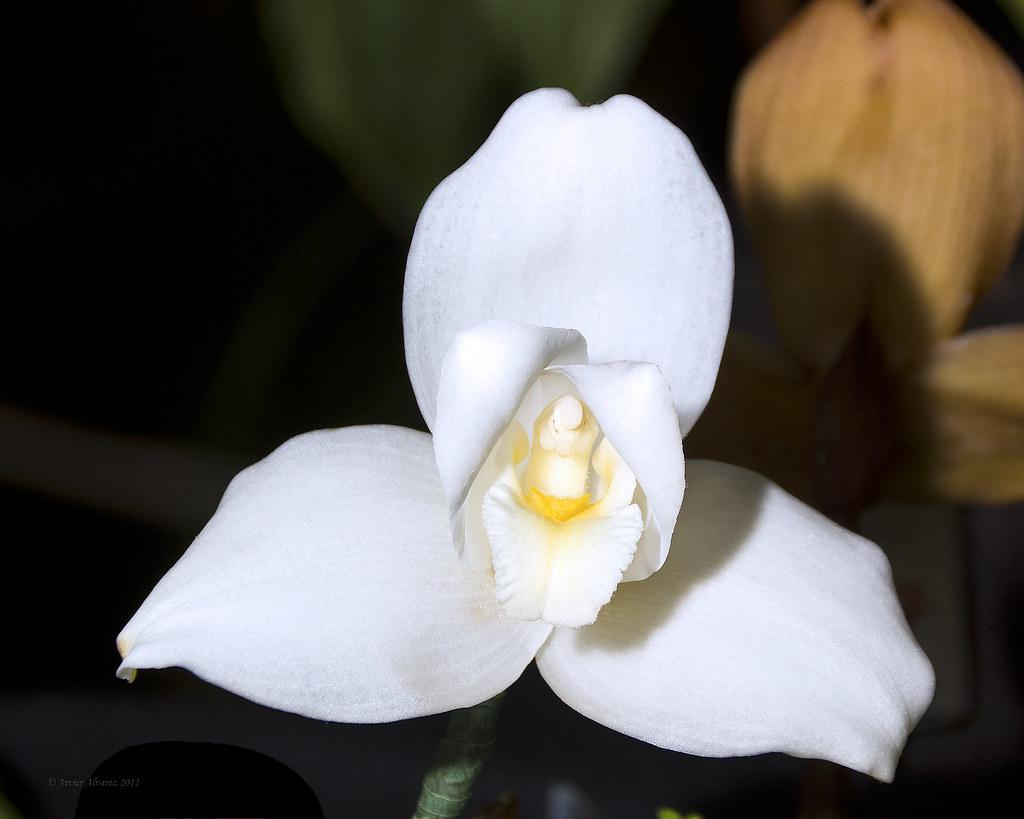 La Monja Blanca De Guatemala