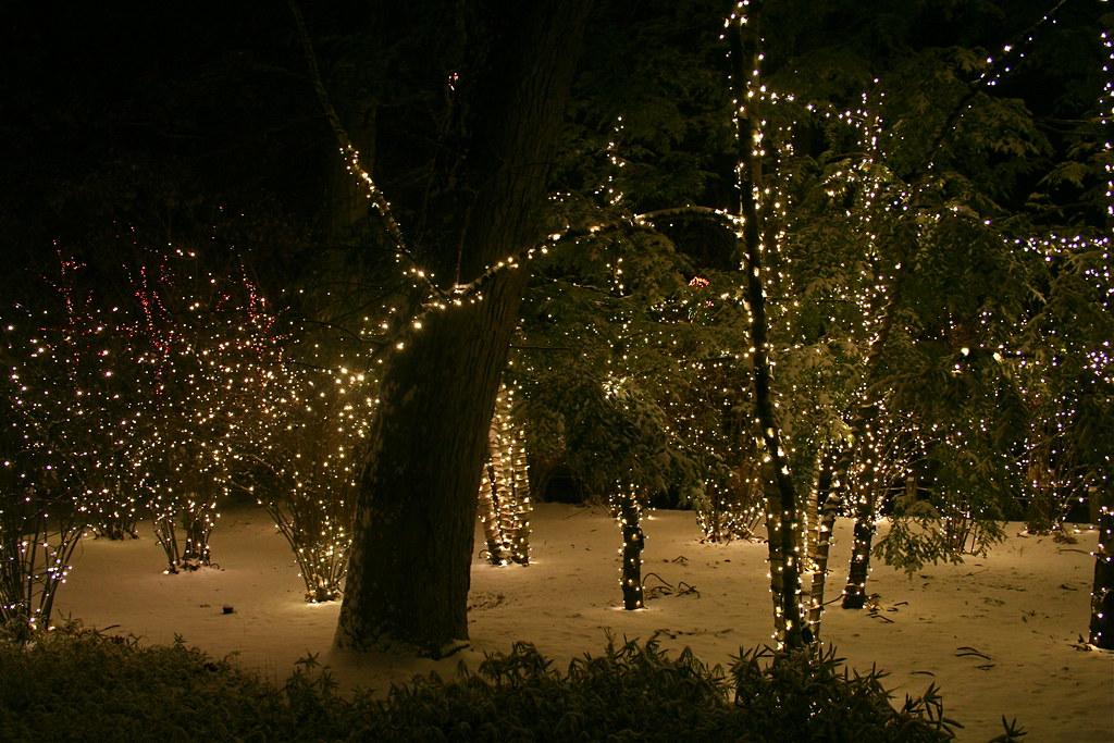 Christmas Lights Toledo Zoo