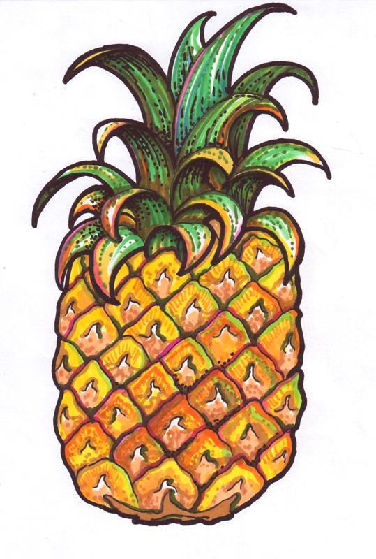 Pineapple Drawing Yelena Keyzman Flickr