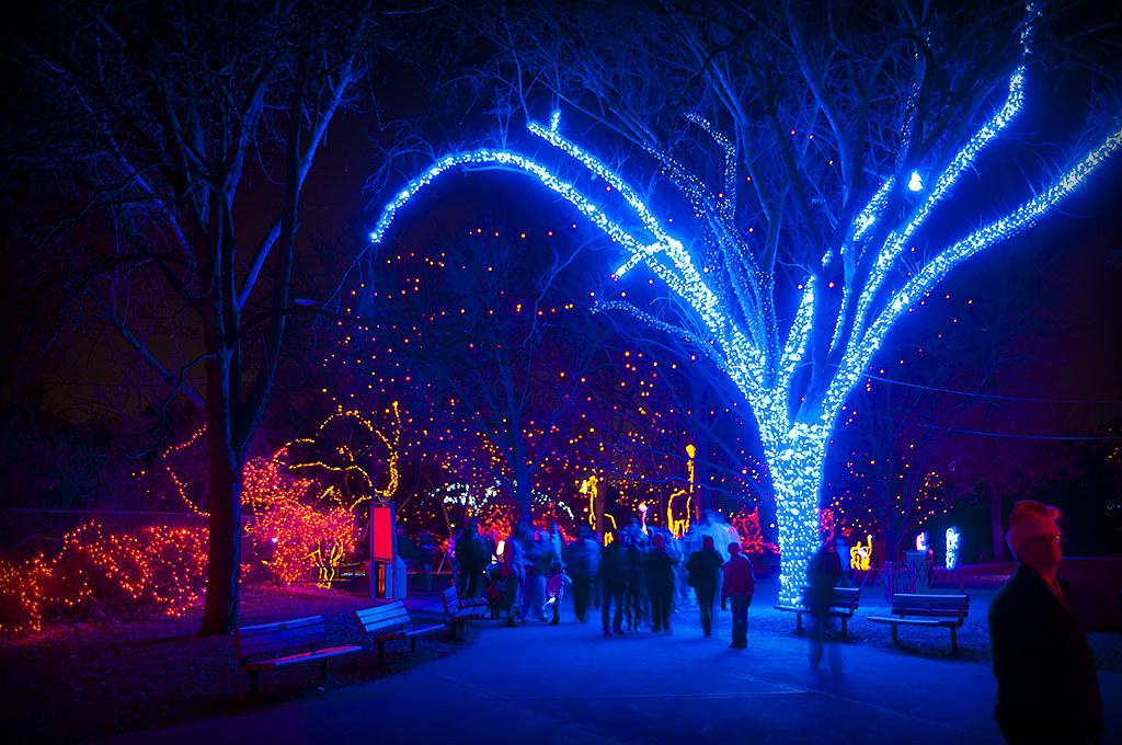 Christmas Lights Zoo Colorado Springs