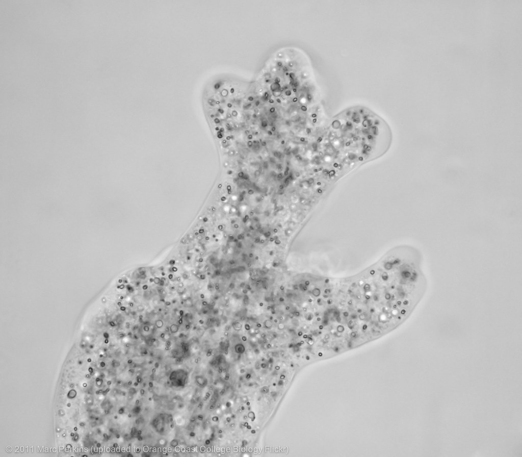 400x Cell Microscope Paramecium Under