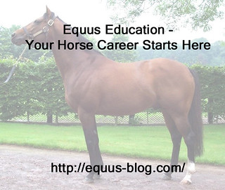 Could Equine Thermography help Your Horse?