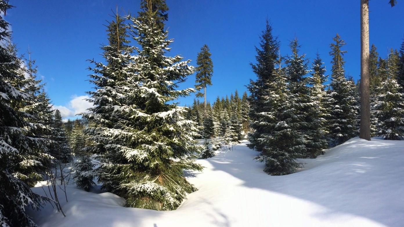 Zde nám vyrůstá zdravý mladý les