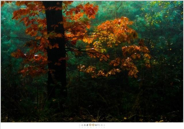 Daar waar het licht doordringt gloeien de kleuren van de herfst in een eigen licht. (105mm (equiv FF: 158mm); ISO100; f/4; t=1/25sec; -1EV)