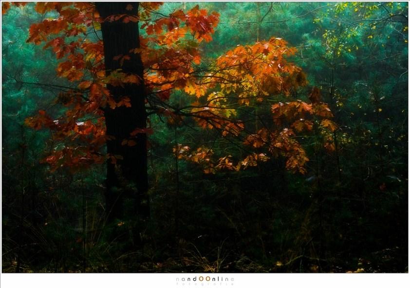 Herfst impressies. Daar waar het licht doordringt gloeien de kleuren van de herfst in een eigen licht. (105mm (equiv FF: 158mm); ISO100; f/4; t=1/25sec; -1EV)