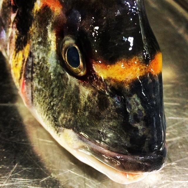Brillo de la piel de un pescado fresco