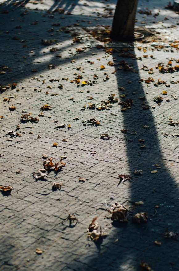 Long shadows and dried leaves