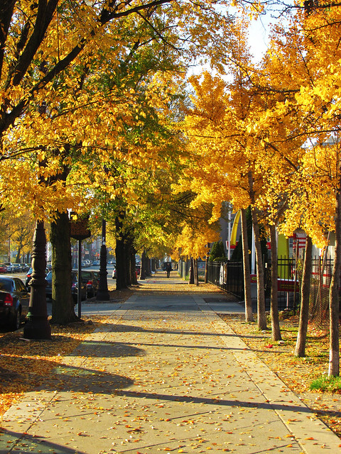 Fall on South Broad Street