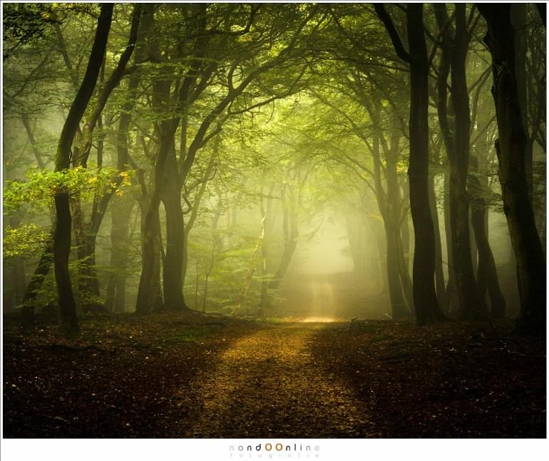 Het licht van de ochtend is in aantocht, het duister van de ochtend en de mistflarden verjagend. (60mm (90mm FF equiv); ISO100; f/11; t=3sec)
