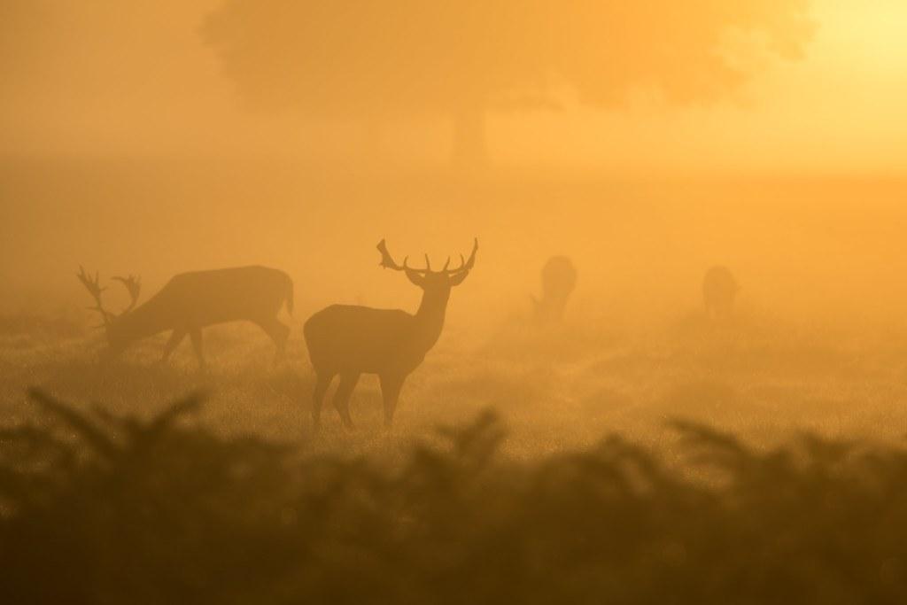 Imagen gratis de unos renos en la niebla