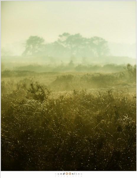 druppels, mist, ochtend, rijp, strabrechtse heide, nandoonline, nando