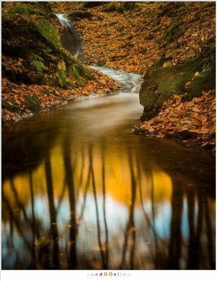 Reflectie van de bomen waar het licht van de zon de herfstbladeren doet oplichten. (17mm, f/11, ISO100 15sec)