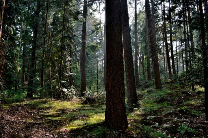 Taking a walk in the forest is a great autumn activity.