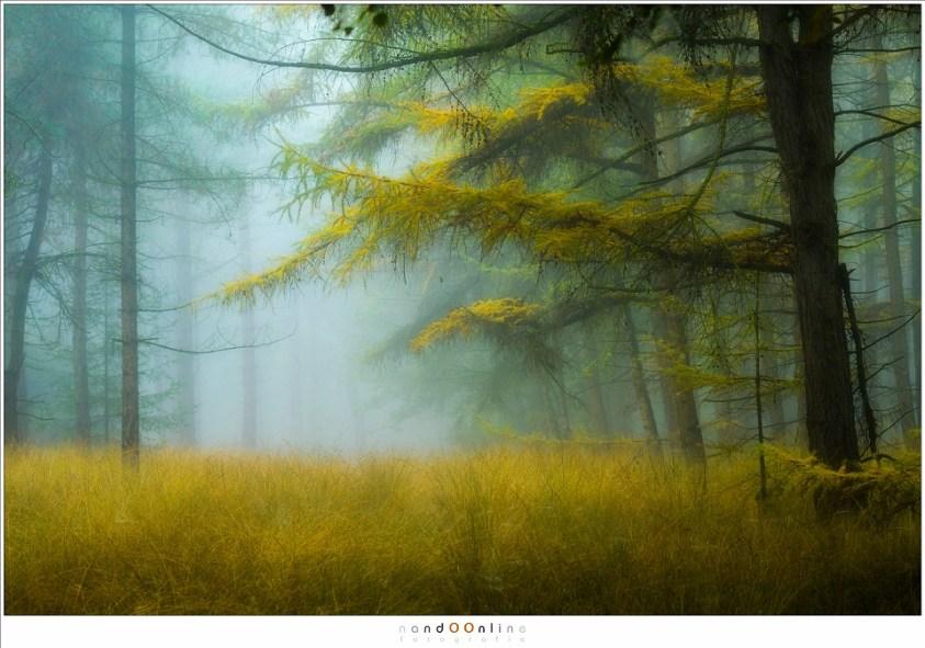 De gouden gloed van de Lariks in herfst tooi (70mm (equiv FF: 105mm); ISO100; f/4; t=1/25sec)