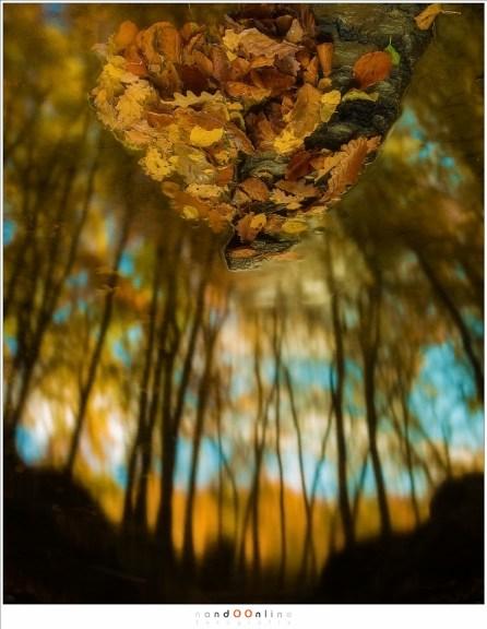 Ondersteboven van de herfst... of misschien het uitzicht vanuit een wereld vol magische wezens. (35mm, f/10, ISO100, 13sec)