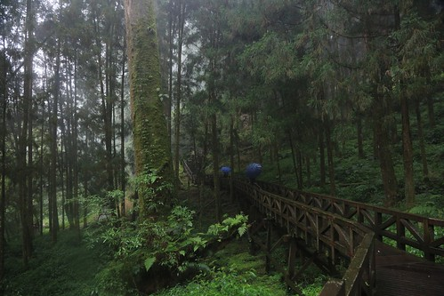 進入山林。夏日感覺阿里山的冷(12.1ys)