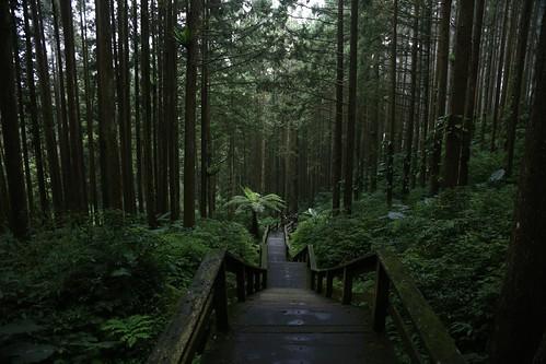 進入山林。奮起湖步道內的迷人生態(12.1ys)