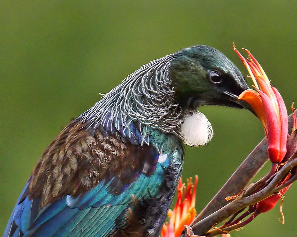 Free Bird Sounds