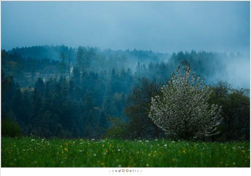 Ochtendnevel speelt een spel tussen de heuvels die achter het chateau Folgoux liggen. Het blauwe schemerlicht heerst nog over het land. In de verte is het chateau te zien, als een natuurlijk element in een prachtig landschap.