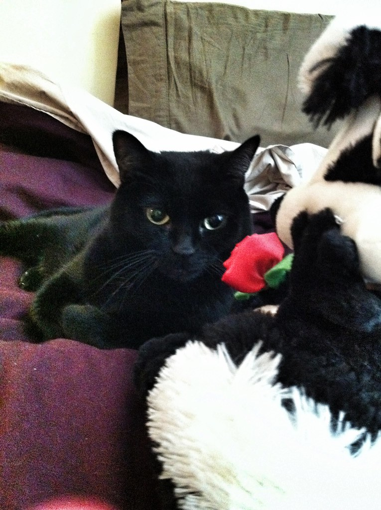 Smokey Enjoying Some Time With Pepe Le Pew Valentines