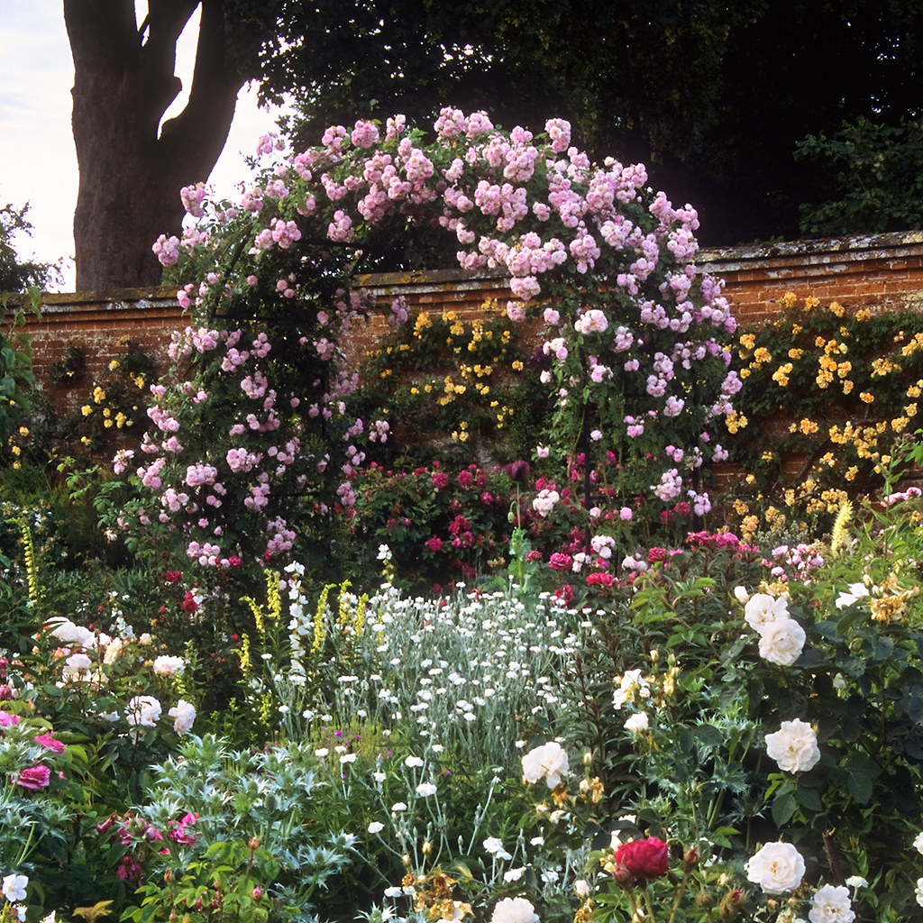Mottisfont Abbey Rose Gardens Hampshire Uk The Best Ro