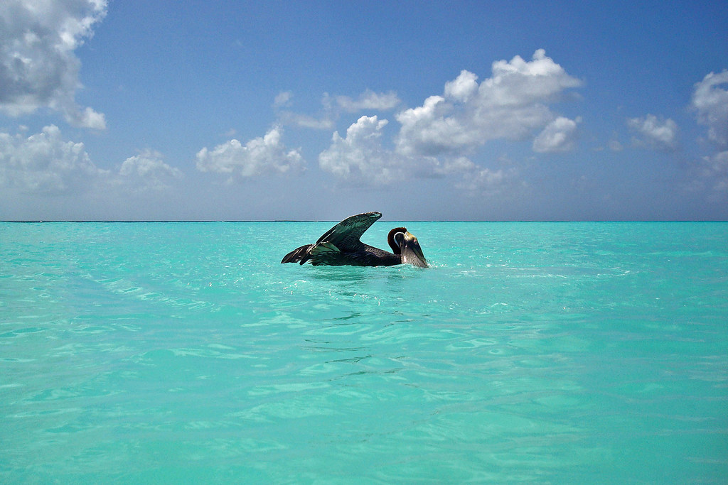 Los Roques The Los Roques Islands Are A Federal