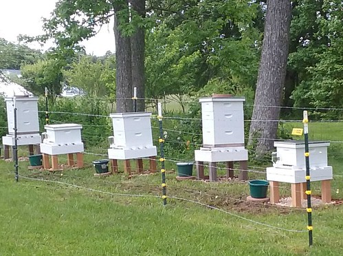 Bee hives on Hill Farm