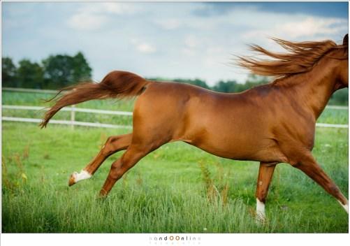In volle vaart van dichtbij passeren geeft pas een indruk hoe snel zo'n groot dier is. (EF70-200L II @ 95mm - ISO800 - f2,8 - t=1/1600sec)