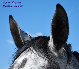 The Horse Dictionary | Equus Education