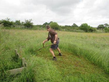 Scything a hay meadow