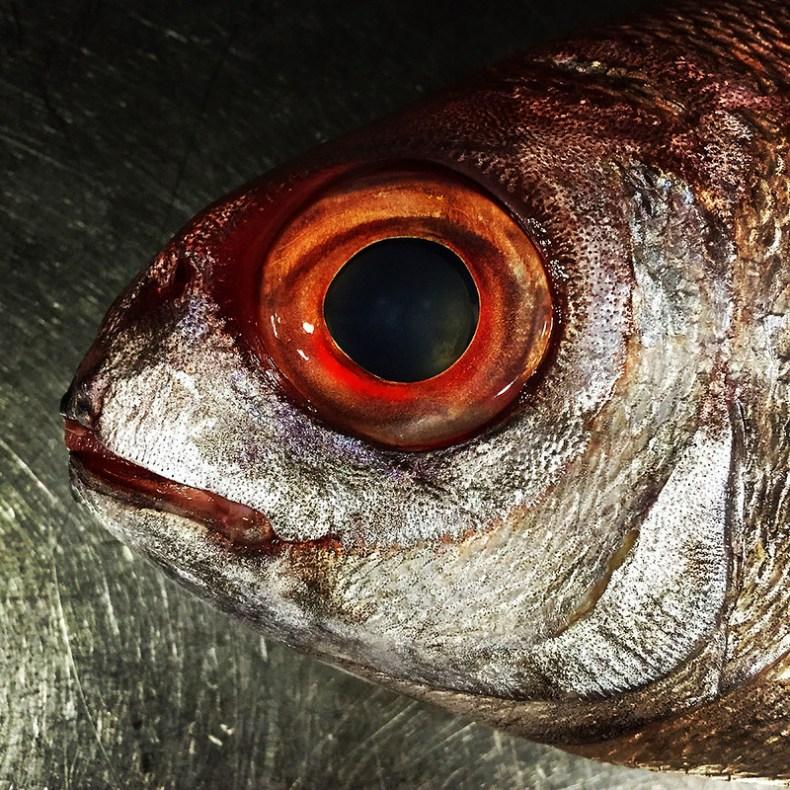 El pescado fresco se ve en los ojos
