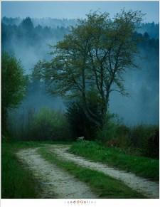 Een sfeervolle ochtend met het pad naar La Fougeraie